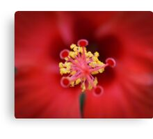 Red Hibiscus Macro Canvas Print
