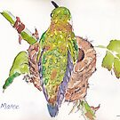Phoebe, the Allen's Hummingbird 2 by Maree Clarkson