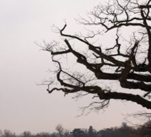 Winter Oak in Morden Park, London Sticker