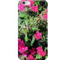 Beautiful pink flowers in the garden. Natural background. iPhone Case/Skin