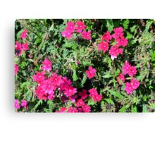 Beautiful pink flowers in the garden. Natural background. Canvas Print