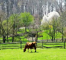 Cow Grazing in Pasture in Spring by Susan Savad