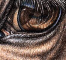 Horse Eye - Animal Detail Drawing Sticker