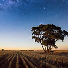 Moon lit tree by David Haworth