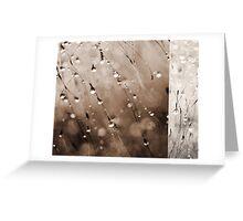Abstract Grass Water Drop Droplet Nature Grey Gray Greeting Card