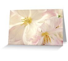 Pink White Flower Garden Floral Flowers White Background Greeting Card