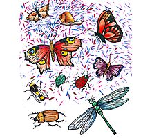 Butterfly & Insect Pattern Photographic Print