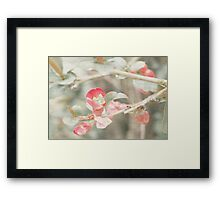 Textured Quince Buds Framed Print