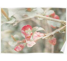 Textured Quince Buds Poster