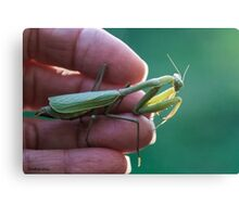 One Praying Mantis in the Hand....... Canvas Print