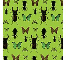 Green bugs Photographic Print