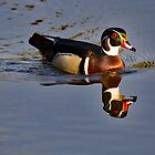 Wood Duck Drake Reflecting by AriasPhotos