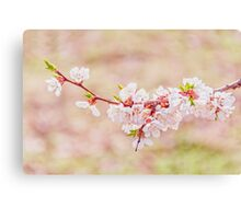 Blooming in the garden Canvas Print