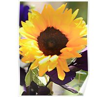YELLOW SUNFLOWER/PURPLE LEAVES Poster