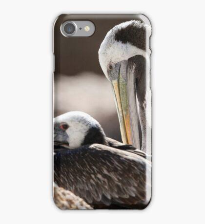 peruvian pellican iPhone Case/Skin