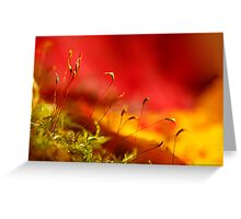 automn moss Greeting Card