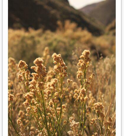 Death Valley Scrub Sticker