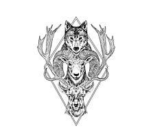 Wolf Ram Hart Photographic Print