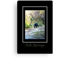 Salt Springs Bear Canvas Print