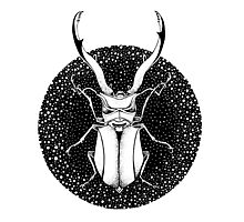 Ink Beetle Photographic Print