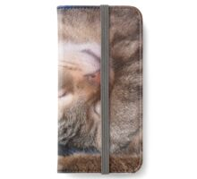 Relaxing sleeping cat iPhone Wallet/Case/Skin