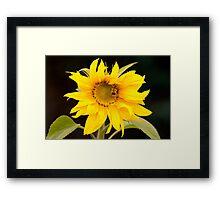 Giant sunflower Framed Print