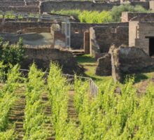 The Vineyards of Pompeii Sticker