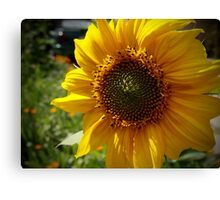 Spring Sunflower Canvas Print