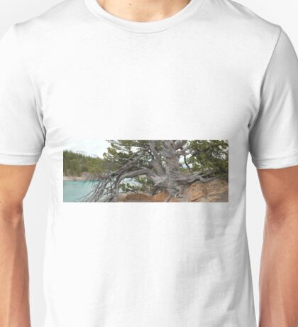 The Pine of Antiquity Unisex T-Shirt