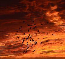 Birds at Sunrise. by fenwickstud