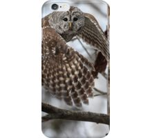 Barred Owl On Point iPhone Case/Skin