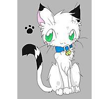 Buchi the white fur Cat Photographic Print