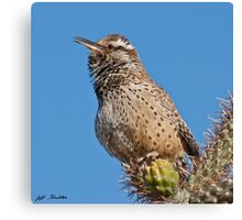 Cactus Wren Singing Canvas Print
