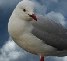 Storm Gull Sticker
