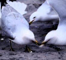 Feeding the Doves Sticker