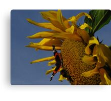 Red Admiral, Bumble Bee & Sunflower Canvas Print