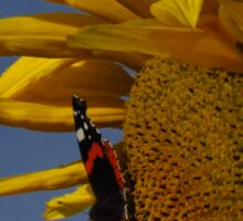 Red Admiral, Bumble Bee & Sunflower Sticker