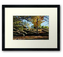 Autumn Sunshine Framed Print