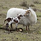 Proud Mother Sheep by ienemien
