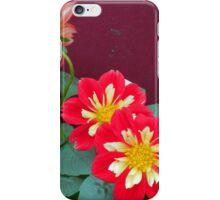 Dahlias in bloom iPhone Case/Skin