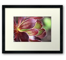 Purple Aeonium Framed Print
