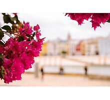 Seville - Flowers and Calle Betis Photographic Print