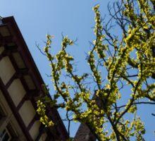 Amsterdam Spring - Characteristic Facade Plus Unusual Tree - Right Sticker