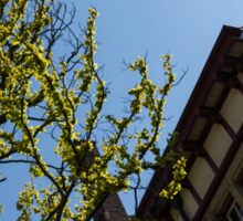 Amsterdam Spring - Characteristic Facade Plus Unusual Tree - Left Sticker