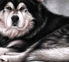 Alaskan Malamute Dog Portrait Sticker