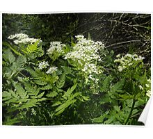 White flowered hedge Poster