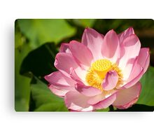 0481 Red Lotus  Canvas Print