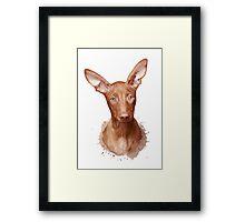 Pharaoh Hound Dog Framed Print