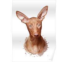 Pharaoh Hound Dog Poster