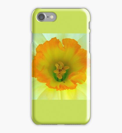 Daffodil close-up with visitor iPhone Case/Skin